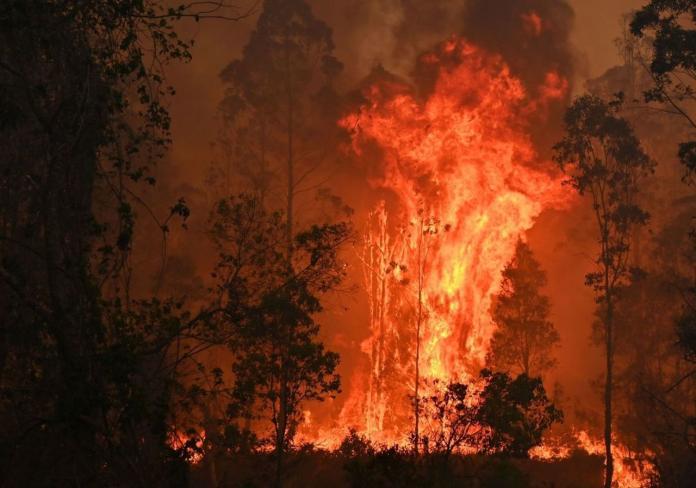 australia wildfires:skynews