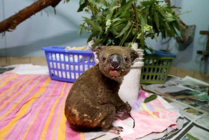 koala:10半島電視台