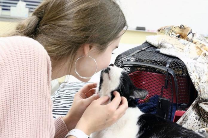 <br> 親人的賓士貓熊熊,一見面就擄獲漢娜的心,但更讓漢娜驚訝的是,牠那熟悉的面孔跟多年前走失的愛貓真的好像!(圖/Hannah Rountree)