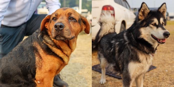 遭野火突襲!全家拋下一切急逃難 只救出13隻愛犬:牠們無可取代!