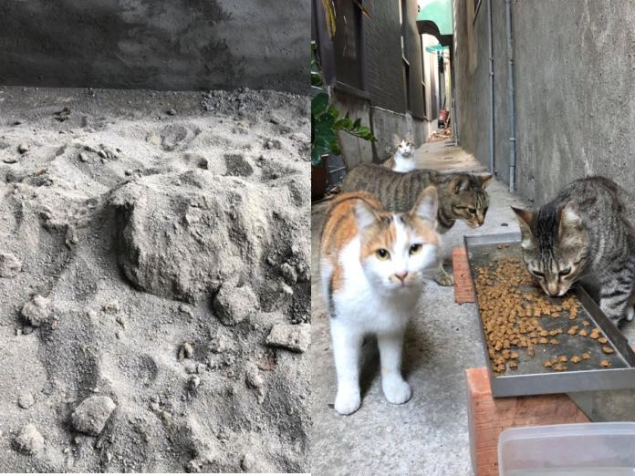 <b>整修</b>用砂土被浪貓當「貓咪公廁」 泥作師父看到好傻眼!