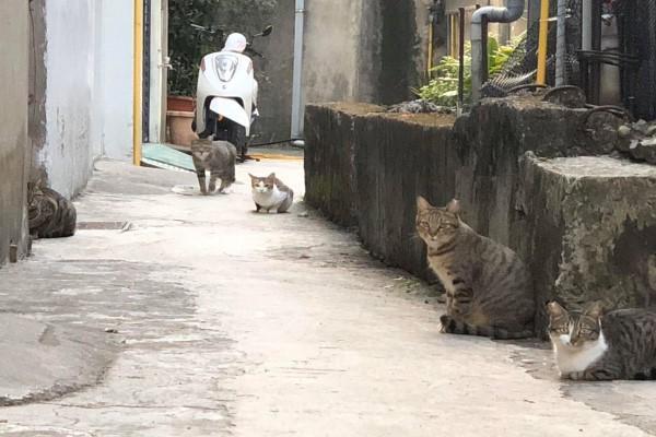 <br> 網友姜小姐的娘家附近有許多浪貓(圖/網友姜婷婷授權提供)
