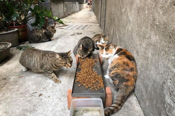 <br> 姜小姐的弟弟平時都會餵養牠們(圖/網友姜婷婷授權提供)