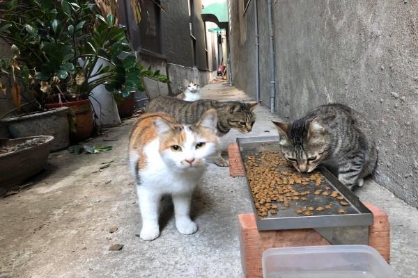 <br> 貓咪:直接幫我們蓋貓咪公廁啦!(圖/網友姜婷婷授權提供)