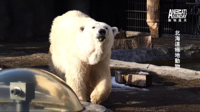 <br> 星期天前往日本取材,拍下許多動物園裡的動物。(圖/星期天配音是對的粉專提供)