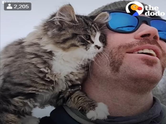 馬克思在雪地健行時遇見一隻親人小貓(圖/翻攝自FB@The Dodo)