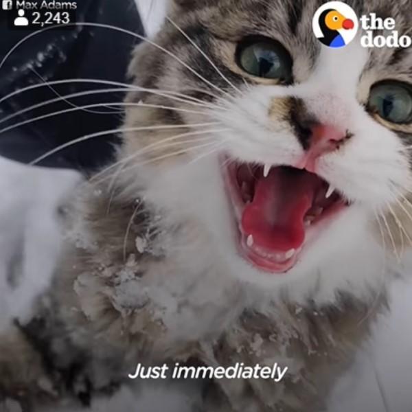 <br> 貓咪:人類快救我,我快冷死了!(圖/翻攝自FB@The Dodo)
