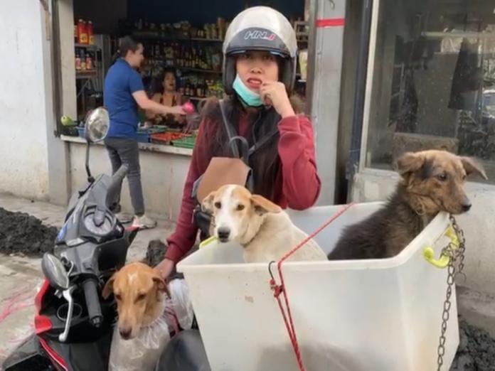 菲國火山噴發 飼主撤離不忘打包3愛犬:一起走!
