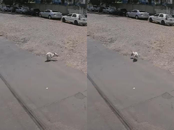監視器錄下女子拋下2條腿白狗 轉身將健全黑狗塞上車加速駛離!