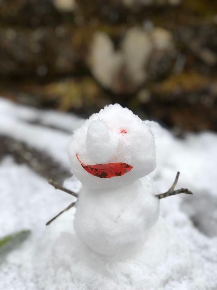 阿里山往玉山也下雪了 遊客驚呼感動「像做夢」