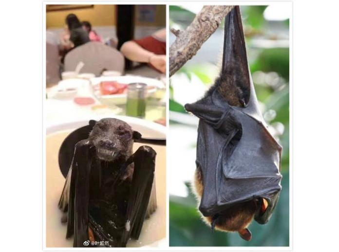為何<b>雲南</b>蝙蝠的病毒卻在武漢爆發?眾人神解「背後主因」