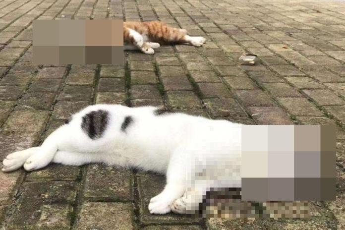 中國大陸部分民眾誤信謠言,誤以為寵物會傳染武漢肺炎,把寵物從高樓摔下致死。(翻攝自微博)