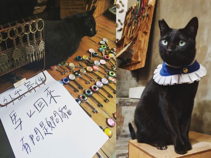 老闆外出「有問題問貓」 網笑:向黑貓問事收幾個罐罐?