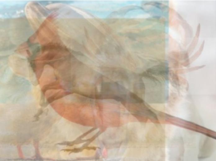 ▲第一眼看到啥動物?揭露你的「隱藏個性」。(圖/翻攝自VIDAORANGE)