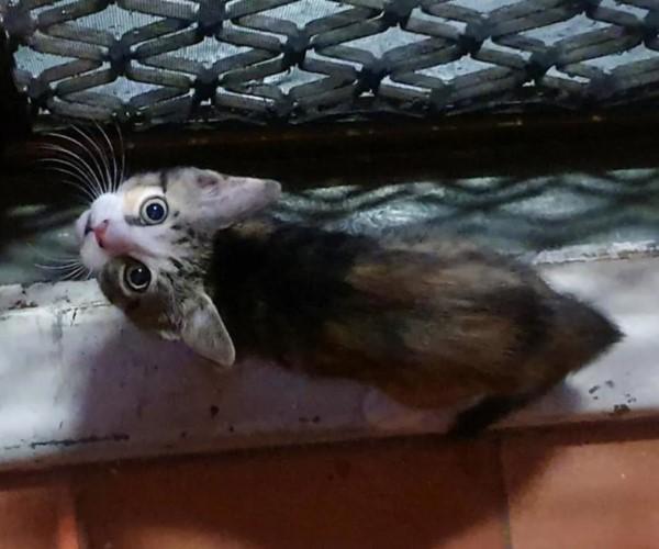 <br> 一隻小浪貓溜進披薩店後院,試圖引起老闆戴夫關注牠(圖/IG@grumpy_chef_dave)
