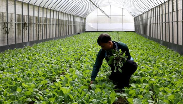 ▲新北果菜公司積極接洽各鄰里社區、公司行號,讓營養午餐有機小農有更多銷售通路。(圖/新北果菜公司提供)