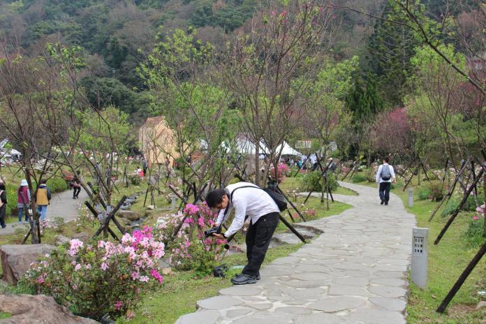 <br> 陽明山花季2/15起跑,櫻花、杜鵑群陸續綻放。( 圖 / 台北市工務局提供 )