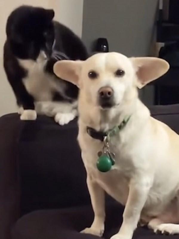 <br> 豪伊:主人你有在看著吼?要打了、要打了,牠要出手了!(圖/翻攝自Youtube@VITALY PETRUKHIN)