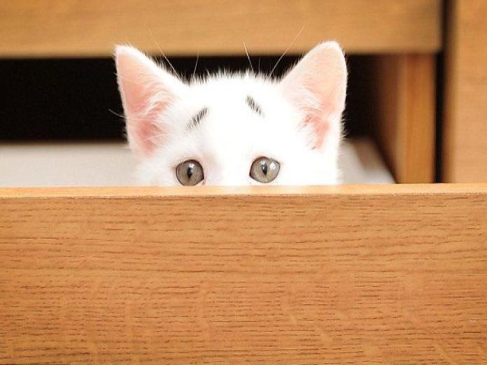 白貓自備<b>憂鬱</b>八字眉 主人笑:「無法拒絕那張臉!」
