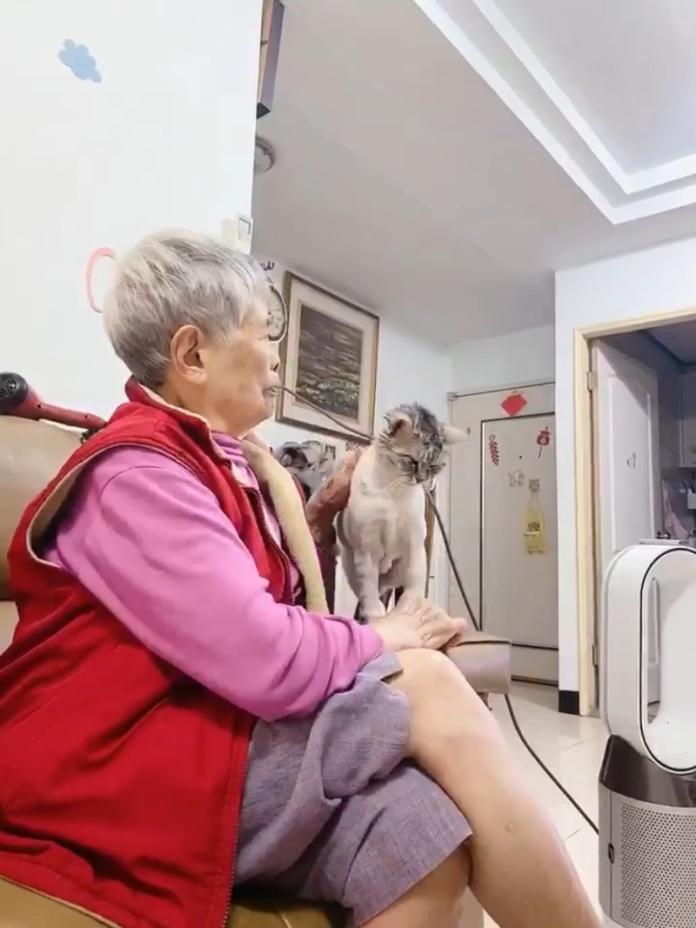 影/貓咪被點耳藥不開心 轉身找阿嬤委屈控訴:朕心裡好苦~