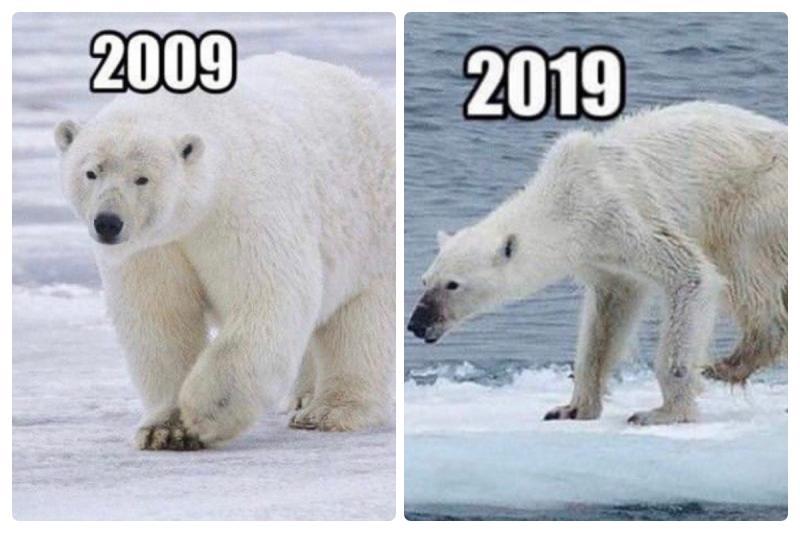 <br> ▲因全球暖化的緣故,北極熊生存陷入困境。(圖/翻攝livescience.com)