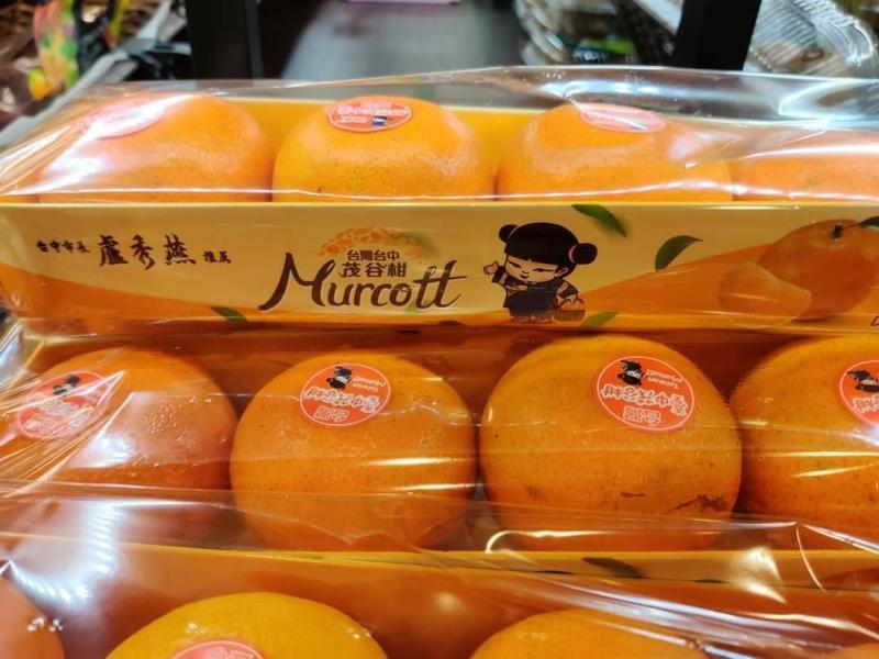 台中茂谷柑熱銷新加坡 網友這樣說