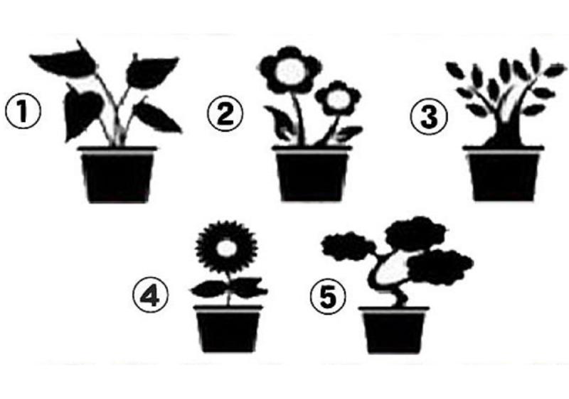 ▲憑感覺選一個盆栽,秒解你的「 5 大潛在個性」。(圖/翻攝自美日誌)