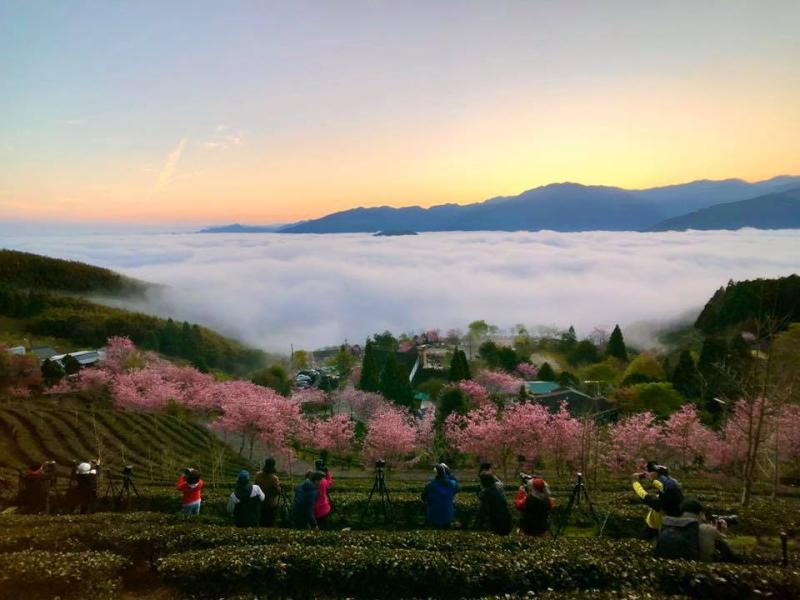 遊客可以在歐式建築住一晚觀賞雲海、日出享受遺世獨立的美景。(圖翻攝自山上人家森林農場臉書)