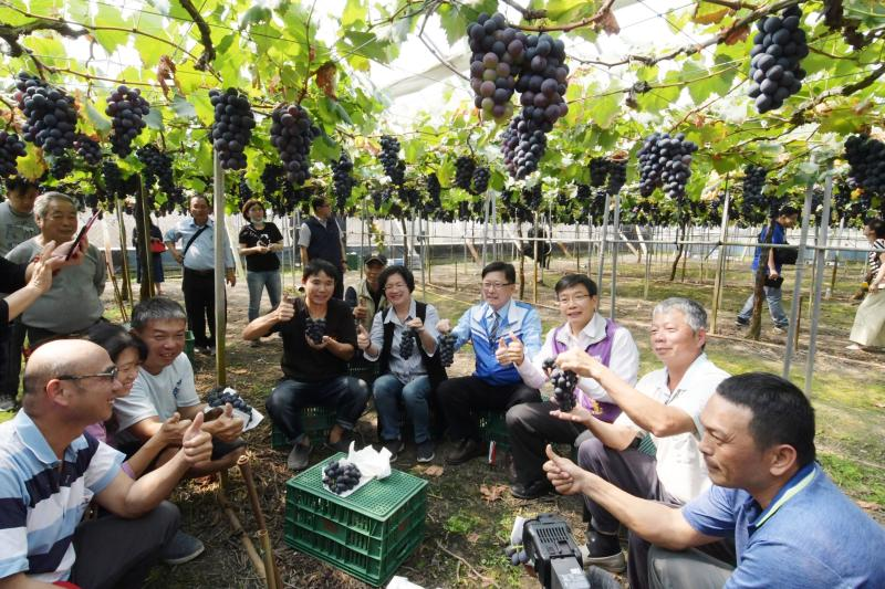影/最好吃的葡萄就在彰化 早春葡萄搶「鮮」上市