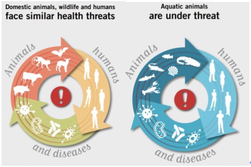 廣編/防疫為何要從「健康一體」反思並多元求解?