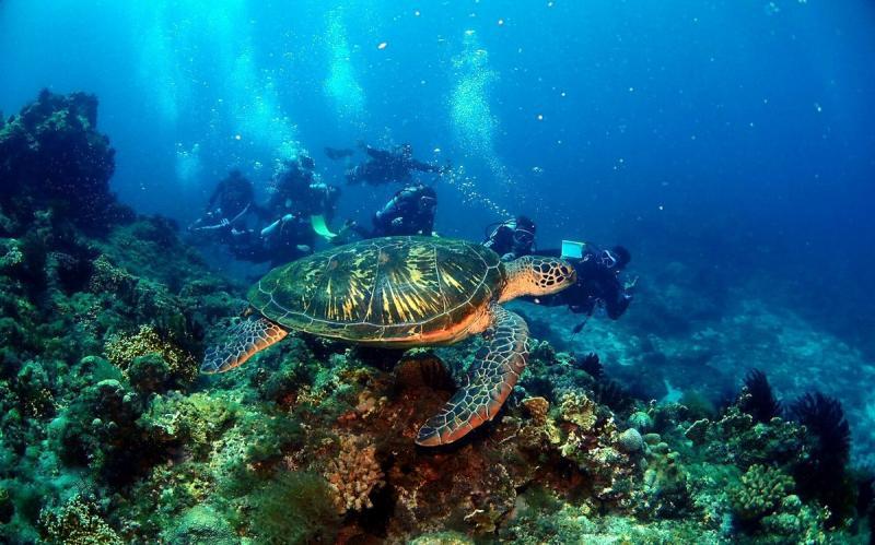 ▲小琉球是全台灣唯一的珊瑚礁島嶼,擁有最豐富的海洋資源,在暖洋洋的海水中浮潛或潛水,近距離接觸色彩繽紛的珊瑚與海葵享受華麗海洋天堂。(圖/屏東縣政府提供 , 2020.03.20)