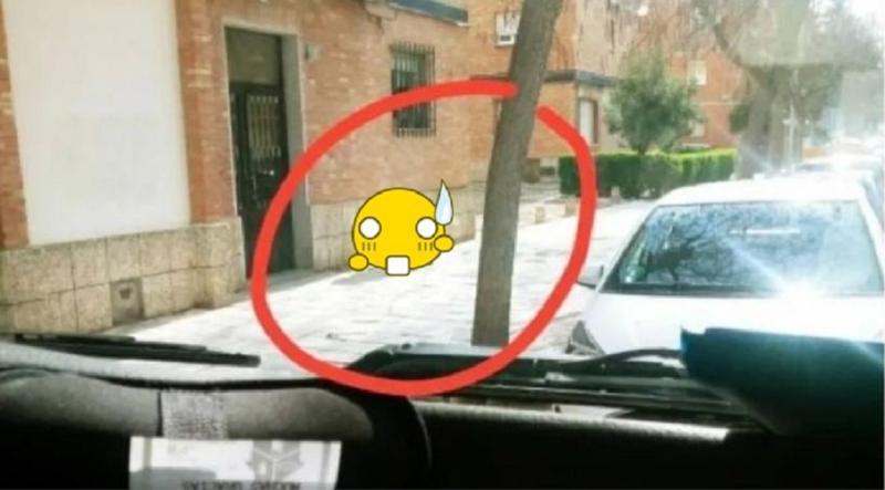 ▲一位西班牙男子在封城後,扮成狗出門。(圖/翻攝推特)