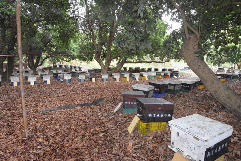▲彰化養蜂產業,主要集中在八卦山山脈,擁有無汙染、水質清澈的絕佳天然養蜂環境。(圖/記者陳雅芳攝)