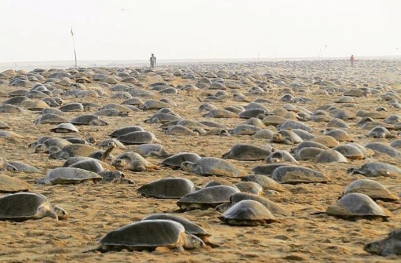 因疫情讓沙灘重生?印度人曝「超壯觀畫面」:7年來首次