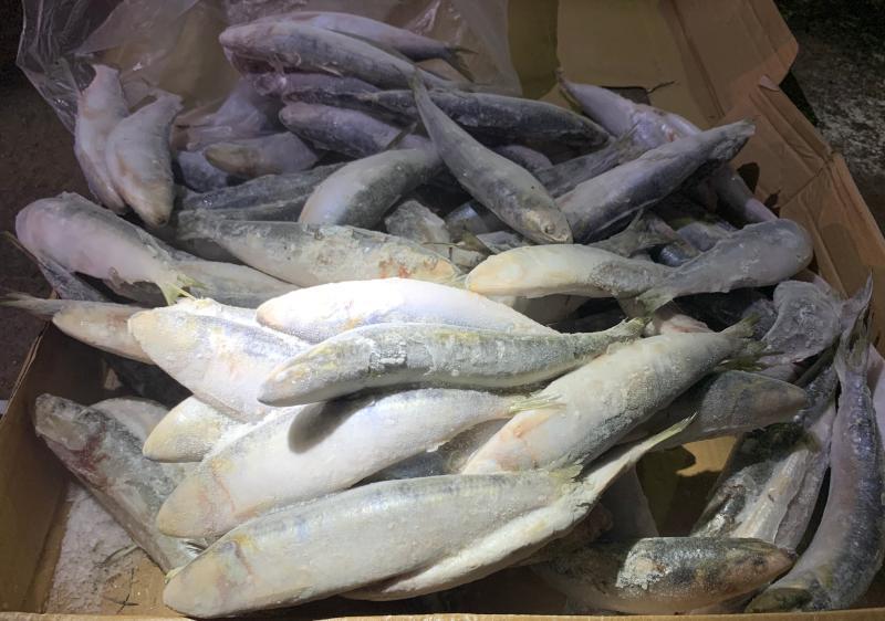 <br> ▲海巡署艦隊分署第五海巡隊查獲的冷凍沙丁魚。(圖/海巡署第五海巡隊提供)