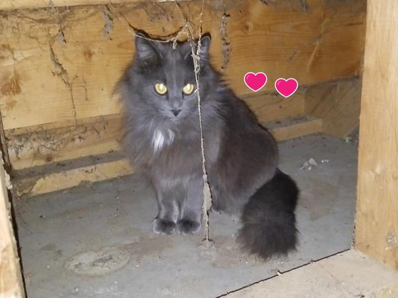 陌生黑貓躲到女子家陽台下 隔天竟給了她一個大驚喜!