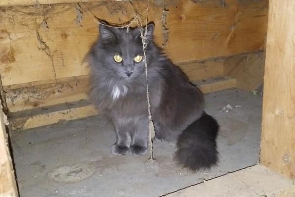 <br> 日前一隻陌生黑貓躲到她家陽台下(圖/FB@Eva Wiedeman)
