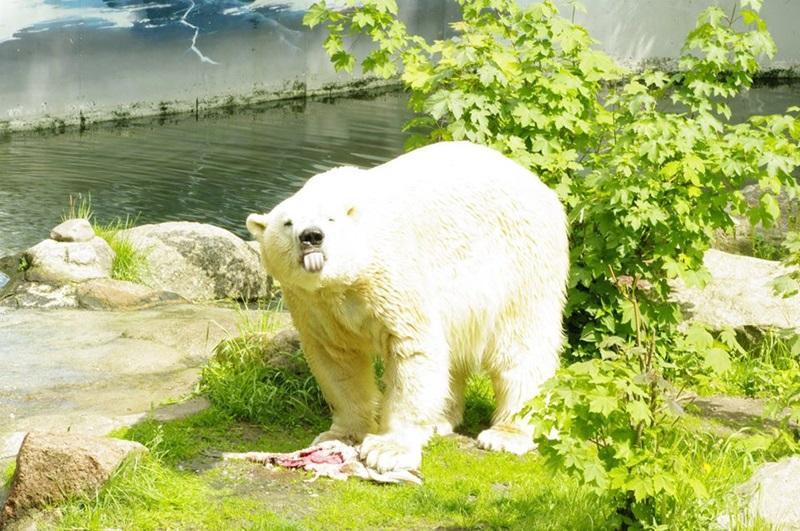 因疫情頓失收入!德動物園列「安樂死名單」 擬將部分動物餵給其他隻
