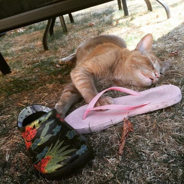 <br> 牠會帶手套、毛巾、鞋子等等回家,特別喜歡人字拖(圖/IG@snorrithecat)