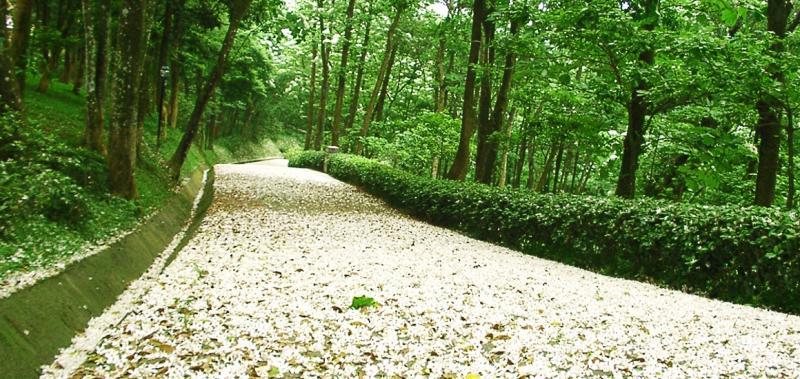 三義西湖度假村(圖翻攝自西湖度假村官網)