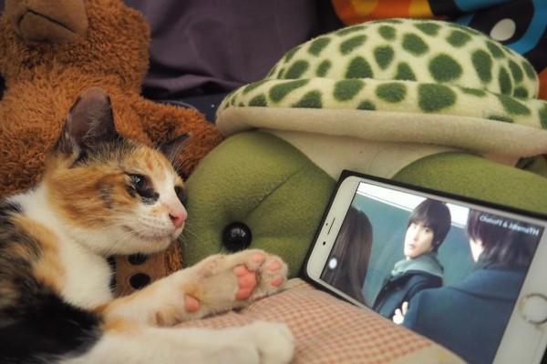 <br> Miala:晚上追劇最過癮了!(圖/FB@ตื่นแมว)