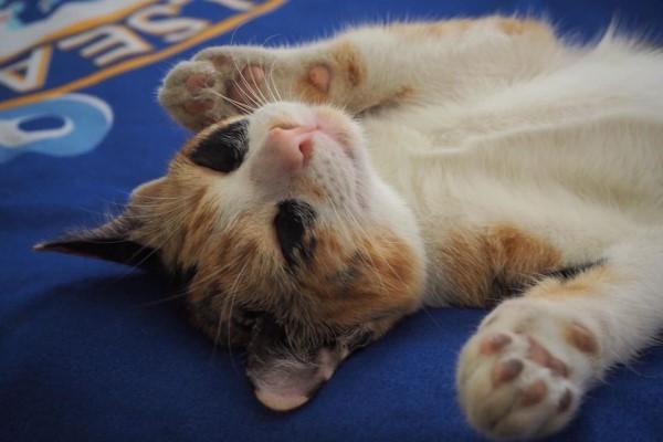 <br> Miala:還是趕快補睡美容覺好了!(圖/FB@ตื่นแมว)