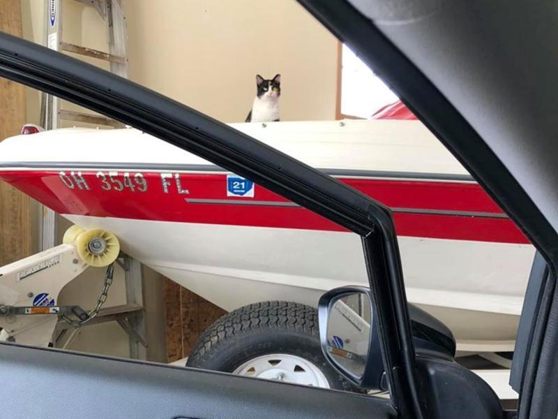 三花貓擅自進駐車庫 用行動說服女子:朕要住下來!