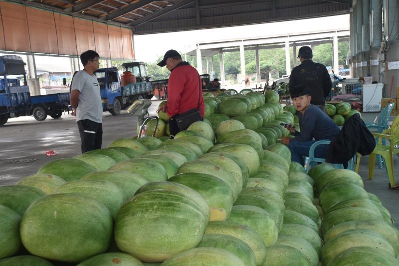 西瓜滯銷50年來最低價!農委會出奇招 籲茶飲業榨西瓜汁