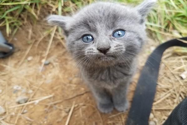 <br> 貓咪:嘿~人類,可以看偶一下嗎?(圖/imgur@radi0raheem)