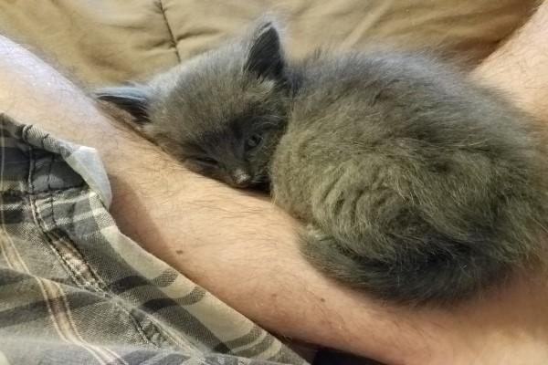 <br> 傑森將小灰貓抱在懷裡,牠立刻窩好並發出呼嚕,由於附近也沒有母貓出現,只好與友人各帶一隻貓咪回家(圖/imgur@radi0raheem)