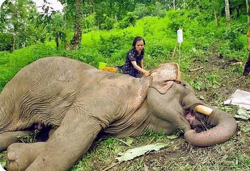 疫情重創<b>泰國觀光</b> 1000頭大象恐活活餓死