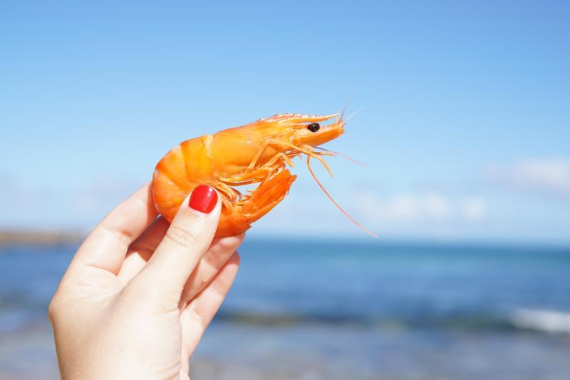 ▲中國大陸沿海 11 省養殖蝦業爆發疫情。(示意圖,非當事畫面/取自 Unsplash )