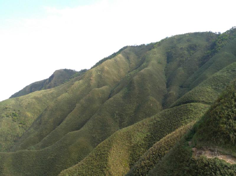別以為這邊人潮少!抹茶山、武嶺今晨起納入1968熱點