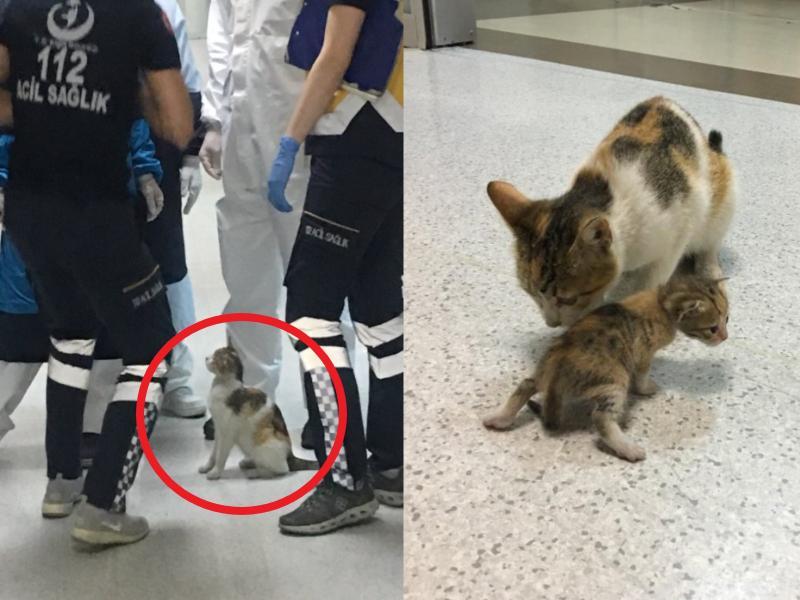 土耳其浪貓「叼著奶喵」衝進急診室求幫助:請救我孩子!